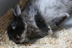 Le comportement du lapin nain site d 39 informations sur le lapin nain - Comment couper les griffes d un lapin ...