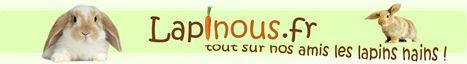 Lapinous.fr, informations sur le lapin nain